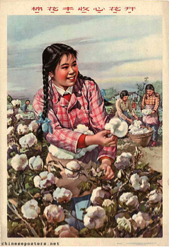 The Bumper Cotton Harvest Makes Our Hearts Bloom